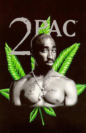 Do Male Marijuana Plants Contain THC?